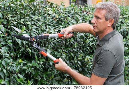 Portrait Of A Male Gardener Cutting Stems Of Plant With Clippers