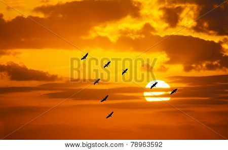 V Shaped Formation Flying In An Orange Sky With A Shining Sun
