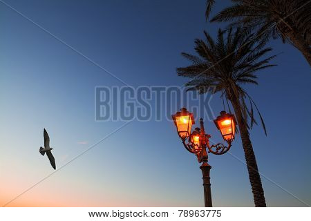 Flying Over The Lamppost