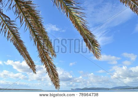 Palm Branches In Alghero Seafront