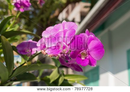 viole orchid under the sun light