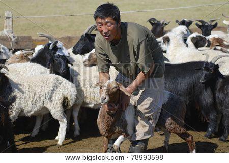 Mongolian recalculates sheep circa Harhorin, Mongolia.