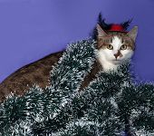 image of blue tabby  - White and tabby cat in red hat and Christmas tinsel sitting on blue background - JPG