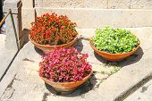 pic of begonias  - Three flower pots with begonia on the sidewalk Italian city  - JPG