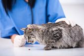 picture of veterinary clinic  - Veterinary clinic - JPG