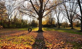 picture of tire swing  - Open yard with sun setting behind a tree with tire swing that shows fall colors - JPG