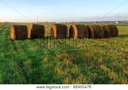 Haystacks on the field in early morning.