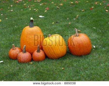 Posing Pumpkins