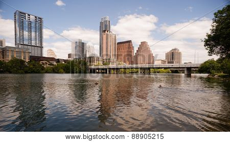 Dogs Swimming Playing Colorado River Downtown Austin Texas