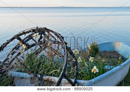 Crab Pot with Daffodils