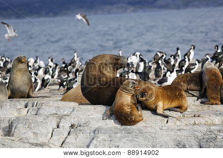 Seals resting on the rock in Antarctica