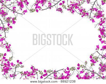 Pink Bougainvillea Flower Frame Oval Shape