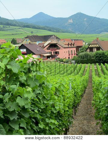 Picturesque Vineyards, Alsace