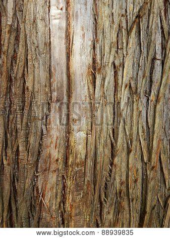 fir-tree barck texture