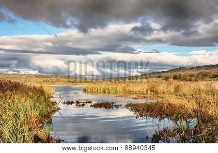 Reeds and water at Leighton Moss, Lancashire