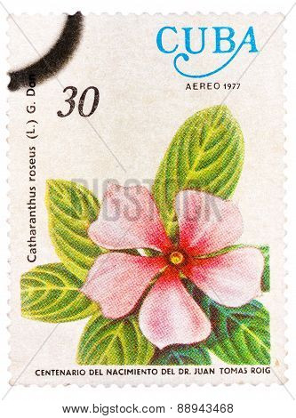 Stamp shows image of a Vinca Rosea