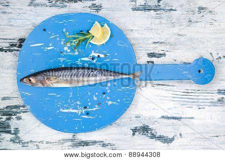 Fresh Mackerel Fish.