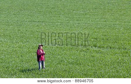 Peasant In Green Wheat Field