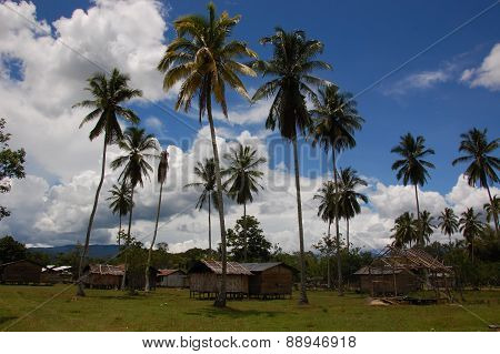 palm trees in west papuan village