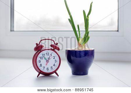 Sprouting Onion In A Glass And Clock