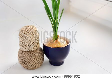 Sprouting Onion In A Glass And Two Skeins Of Thread