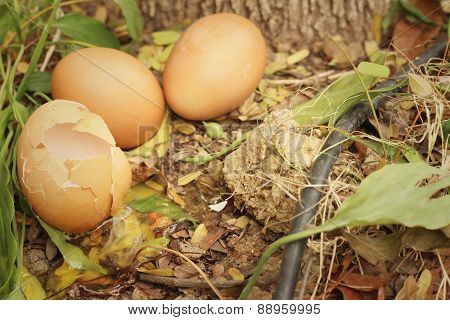 Eggs And Egg Cracked On The Ground.