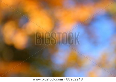Beautiful abstract nature bokeh. Blurred background.