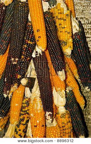 Hanging Corn