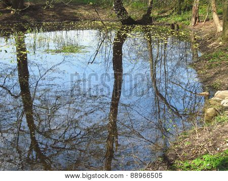 pond in the wood