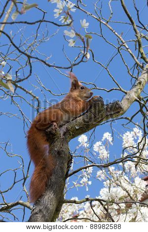 Squirrel Against Blue Sky