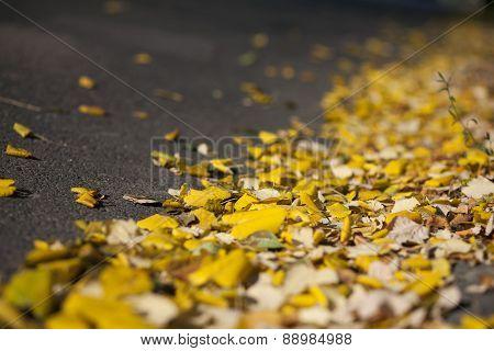 Yellow Leaves On Asphalt