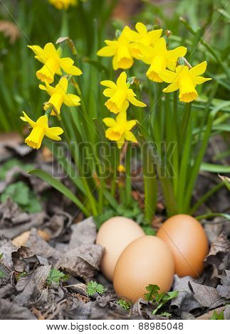 Real Plain Easter Eggs With Flowers In Garden