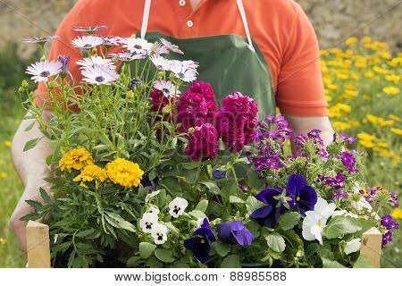 Composition Of Spring Flowers