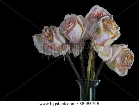 Very Beautiful Vase of Faded Pink Roses on Black