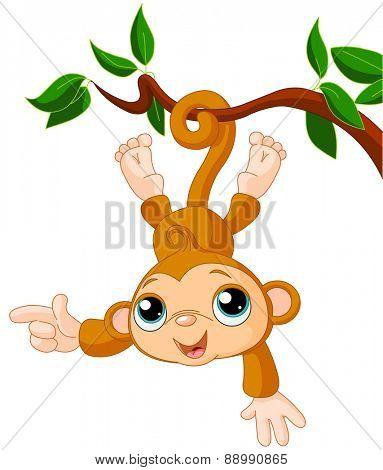 Cute baby monkey is swinging on a tree