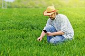 picture of farmer  - Farmer Photographing Young Wheat Cultivation Field for Examination and Growth Control Purposes Crop Protection Concept - JPG