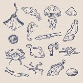 picture of hydra  - Hand drawn vector set of various ocean inhabitants - JPG