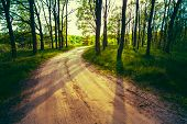 Beautiful Green Forest In Summer. Countryside Road, Path, Way, L poster