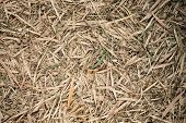 pic of bamboo leaves  - Bamboo leaves fall on ground may use as background - JPG