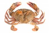 stock photo of crab  - raw soft shell crab isolated on white background - JPG