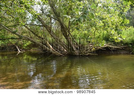a shaded spot in a creek
