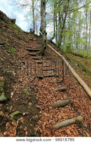 wooden stairs in autumn forest