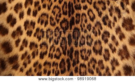 Real Tiger Fur
