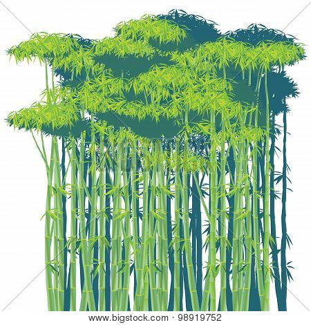 Bamboo Thickets