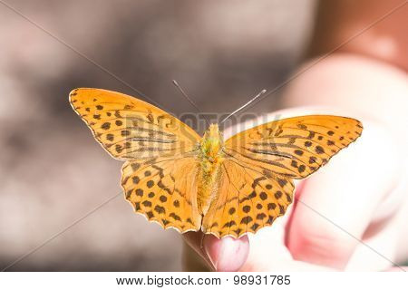 Orange Butterfly On Human Hand. Selective Focus, Shallow Dof