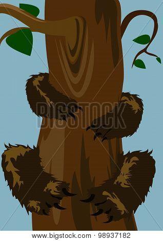 Bear On The Tree