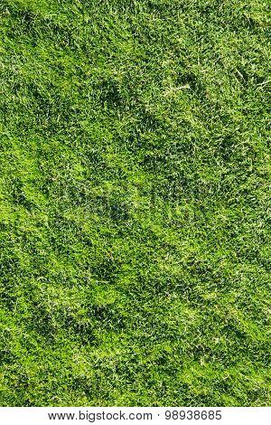 grass texture from a field