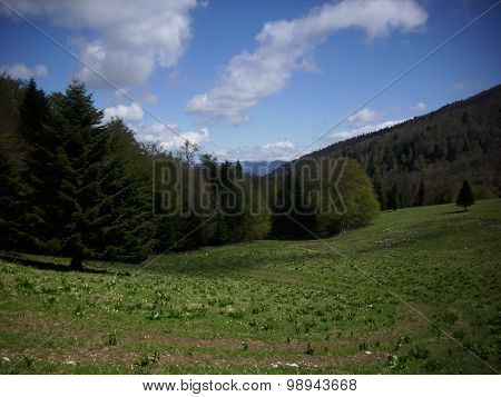 French lower alpine valley meadow with trees and grass