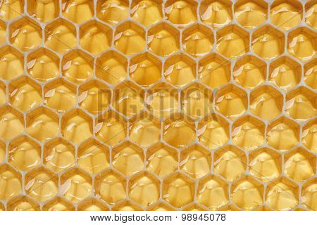 Close-up View Of Honeycomb