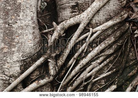 Color Tone Of Gray And Dark Root Tree